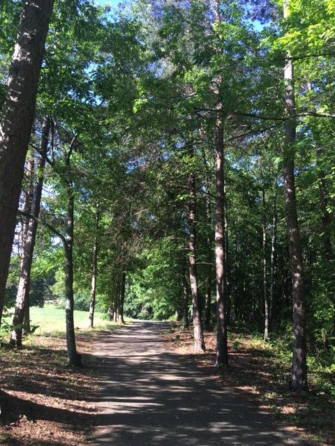 Laurel Park 3