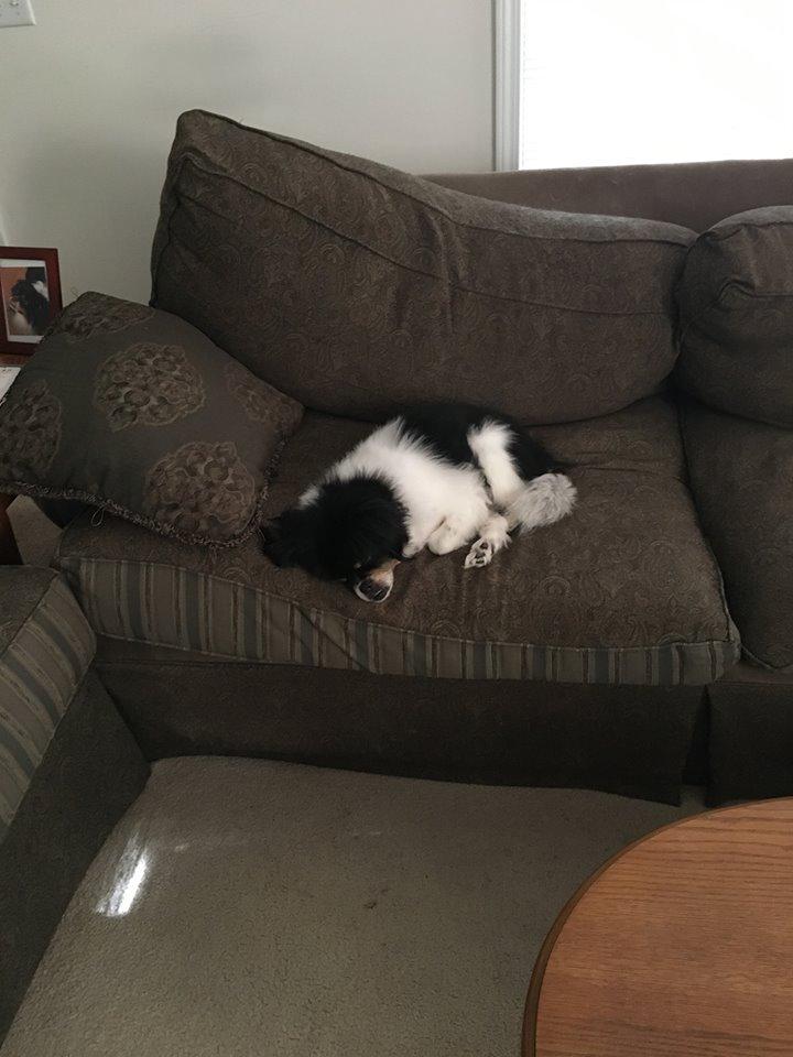 Winnie on Couch 1